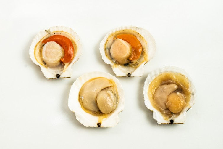 Frozen scallop delivery to you - Oktopurs Online