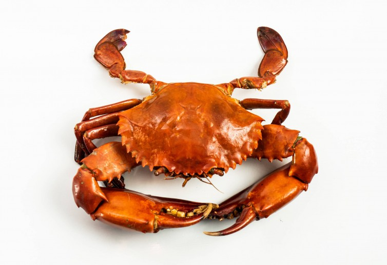 Fresh Crab Delivery to you - Oktopurs Online
